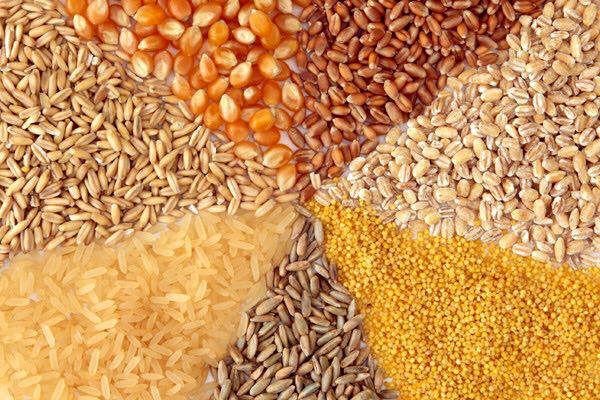 طرح استانداردسازی خوراک دام در سمنان اجرا میشود