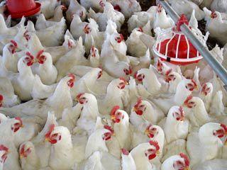 اجرای برنامههای گسترده برای پیشگیری از ورود بیماری آنفولانزای پرندگان به اصفهان