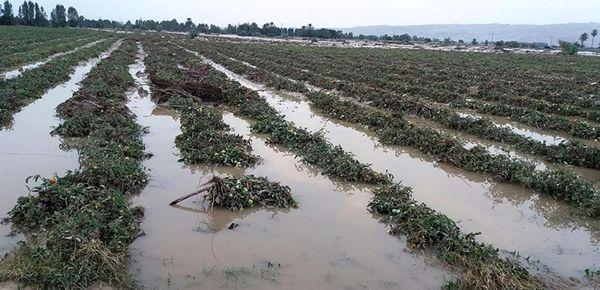 سیل صیفیکاریهای جنوب را نابود کرد