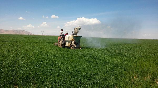 مبارزه با سن غلات در ۲۱ هزار هکتار از مزارع کشاورزی شهرستان بویین زهرا