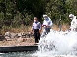 کاهش 80 درصدی بروز بیماری نکروز بافت خون ساز عفونی در ماهیان قزل آلای آذربایجان شرقی