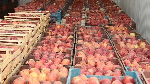 محصولات کشاورزی پایه صادرات غیرنفتی