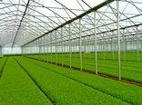 سهم گلخانههای ایران به 0.6 درصد سطح گلخانه های جهان رسید