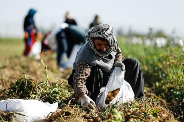 کاهش تابآوری بخش کشاورزی / دو عامل اصلی کاهش اشتغال در بخش کشاورزی چیست؟