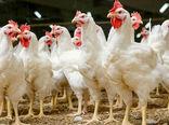 کشف و ضبط ۷ تن مرغ زنده قاچاق در فارسان