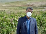 رتبه پنجم آذربایجان شرقی در تولید گل محمدی کشور