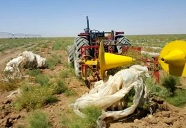 استقاده از مالچ پلاستیکی و لولههای تیپ در مزارع کشاورزی  مدیریت شود