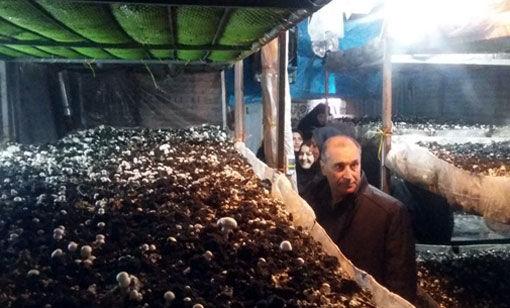 برگزاری کارگاه مهارتی پرورش قارچ دگمه ای در شهرستان عجب شیر