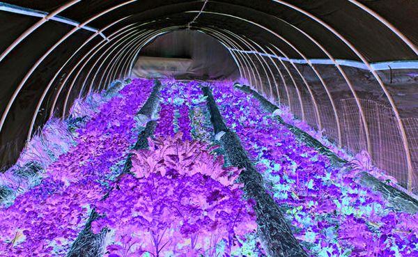 احداث ۸۵ هکتار گلخانه در رزن و درگزین