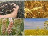 خرید تضمینی ۸۶ هزار تن گندم از کشاورزان اصفهانی