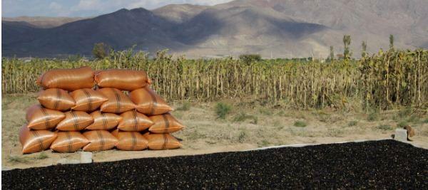تهیه نهاده باکیفیت از مشکلات بخش کشاورزی است