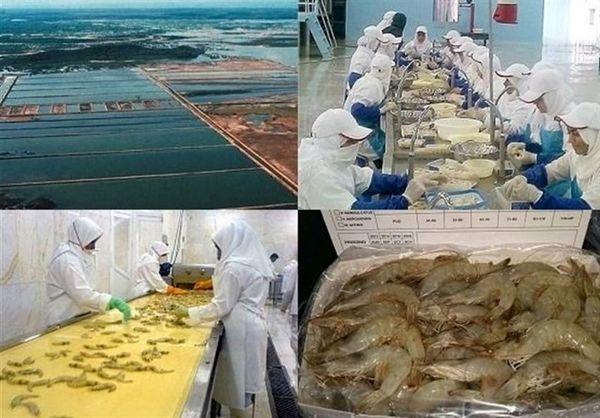 ۸۰ درصد صنایع فرآوری آبزیان استان بوشهر در مدار فعالیت و تولید قرار گرفت