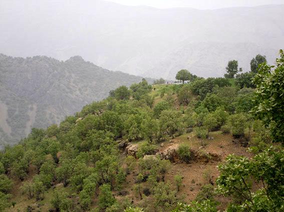 آغاز طرح مبارزه با آفت جوانخوار در جنگلهای بلوط شهرستان لردگان