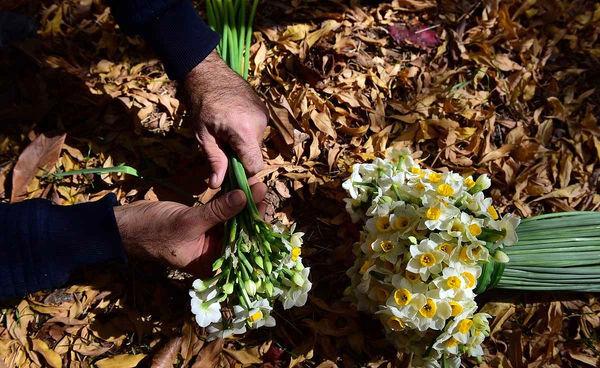 انجمن تولید گل نرگس تشکیل شد