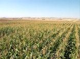 کشت شش رقم پاییزه نباتات علوفهای به صورت مقایسهای در شهرستان هوراند