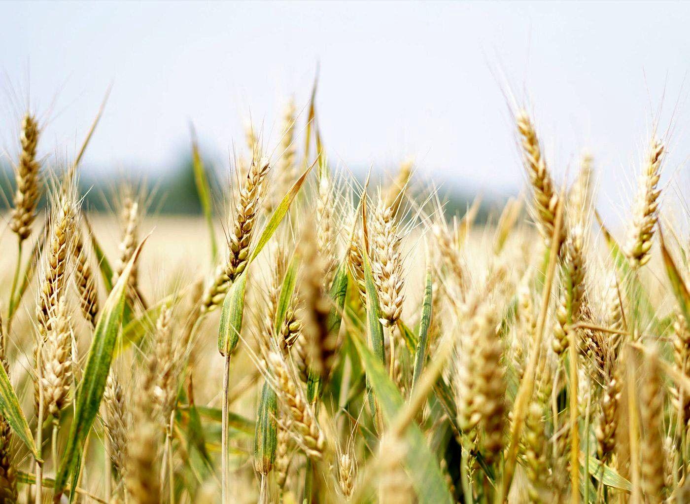 برگزاری دوره آموزشی بینالمللی اصلاح مولکولی برنج در رشت