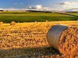 خیز انگلیس برای تبدیل شدن به تولید برتر مواد غذایی جهان
