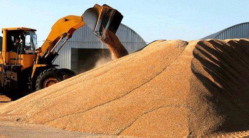 21 هزار تن گندم در چهارمحال و بختیاری ذخیره شد