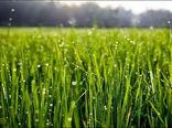 بایدها و نبایدهای کشاورزی تا ۲۸ اردیبهشت