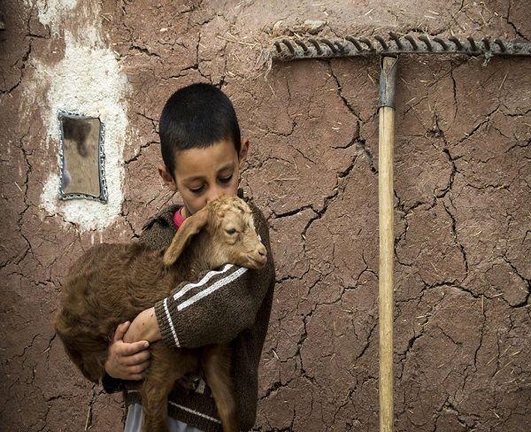 برندگان مسابقه عکس OIE 2017 شناخته شدند/ هنرمندان ایرانی در میان برندگان
