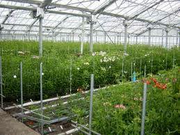 افتتاح سه گلخانه کشت گوجه در شهرستان نرماشیر