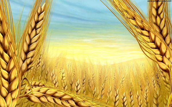 رفتار کشورهای عمده در بازار کشاورزی جهان