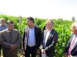 بازدید هیأت تجاری آلمان از ظرفیتهای کشاورزی خراسان شمالی