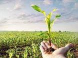 11 طرح تحقیقاتی کشاورزی استان بوشهر در هفته انتقال یافتههای طرحهای تحقیقاتی ارائه شد