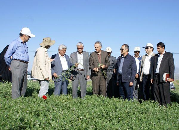 پروژه امنیت غذایی ایران ایکاردا هزینهها را کاهش میدهد