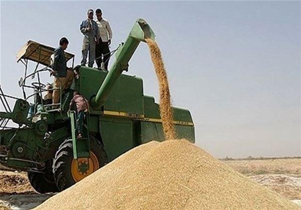 بیش از ۱۳۱ هزار تن گندم در خراسان شمالی خریداری شد