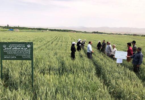 برگزاری مراسم روز مزرعه گندم آبی در شهرستان بناب