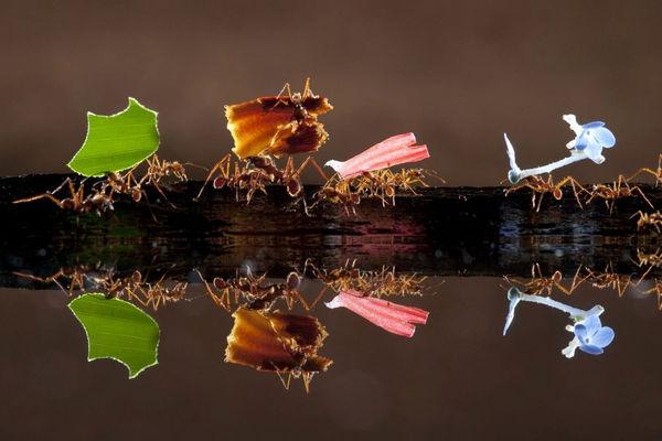 انعکاس تصویر حیوانات در آب