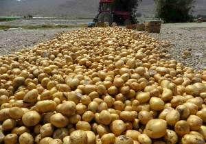 پیشبینی برداشت 11 هزار تن سیبزمینی از مزارع شهرستان شاهرود