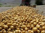 در سال جاری بیش از 16 هزار هکتار از اراضی به زیر کشت سیب زمینی رفته است