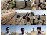 آغاز کشت پیاز در ۵هزار هکتار از اراضی کشاورزی میناب