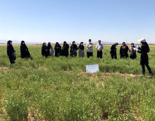 بازدید ترویجی بانوان روستایی از مزرعه نمایشی سیاهدانه در شهرستان بناب