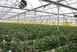 مشکلات گلخانه داران متقاضی تسهیلات بانکی در شهرستان پیشوا بررسی شد