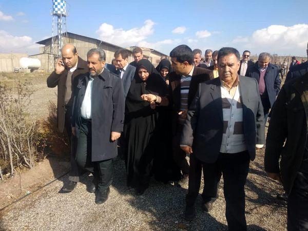 بازدید استاندار قزوین از یک واحد پرورش شتر مرغ در ابیک