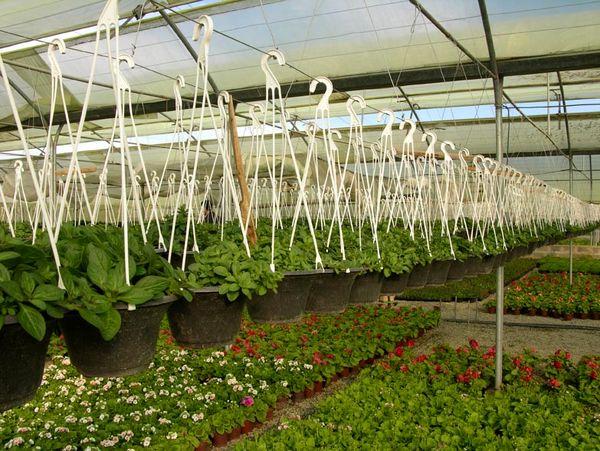 راهاندازی نخستین تعاونی گلخانهداران استان بوشهر
