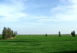 واگذاری ١٧۴ هکتار از اراضی سیستان و بلوچستان برای اجرای طرحهای کشاورزی