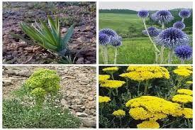 تهیه ۳۱ طرح بهرهبرداری گیاهان دارویی در خراسان شمالی