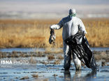 موردی از آنفلوانزای پرندگان در همدان مشاهده نشد