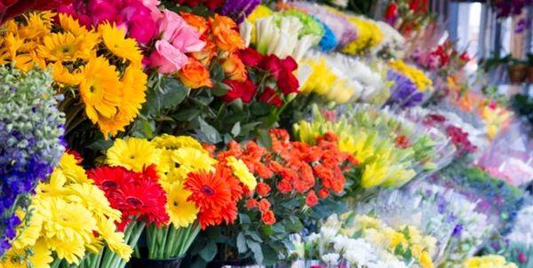 بلایی که کرونا بر سر محصولات کشاورزی آورد؛ گلهایی که معدوم شد