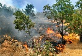 95 درصد آتش در جنگلهای گچساران مهار شد