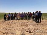 بازدید کشاورزان البرزی از طرح سیمیت گندم دیم شهرستان آوج