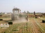 افزایش 160 درصدی تولید زراعی در استان قزوین