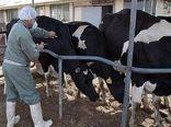 هشدار در مورد بیماری تب سه روزه در گاو