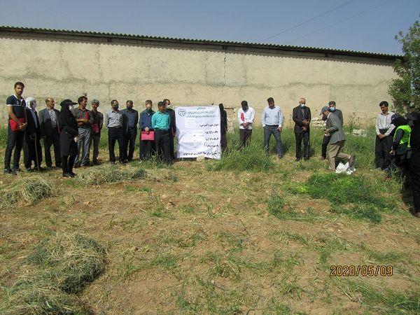 برگزاری کلاس آموزشی کشت گیاه ماشک و تریتیکاله در شهرستان ایوان