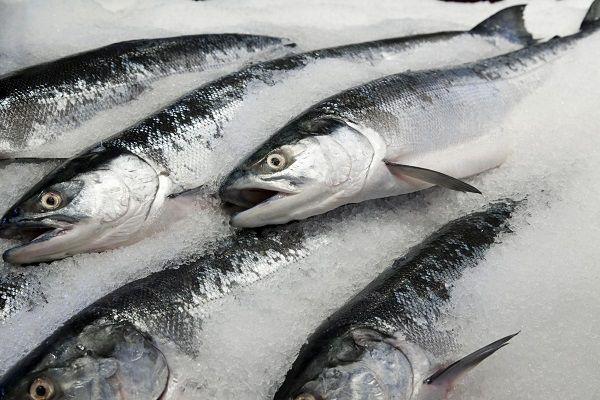 قیمت ماهی افزایش یافت
