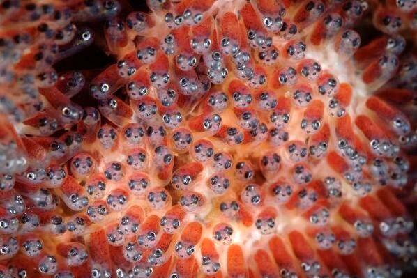 ثبتنام در سامانه زنجیره تامین و توزیع تخم چشمزده ماهی قزل آلا